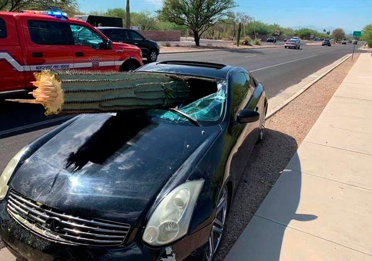 De cactus doorboorde voorruit van de auto. Als bij een wonder raakte niemand gewond.