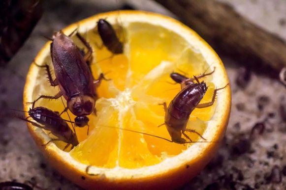 Voedsel wordt beter in afgesloten kasten en dozen bewaard. Zo kan je vermijden dat je bezoek krijgt van de ongewenste insecten.