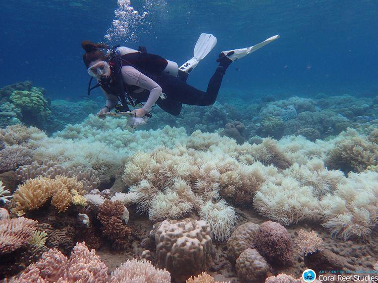 Archiefbeeld van de bleekschade aan het Great Barrier Reef.