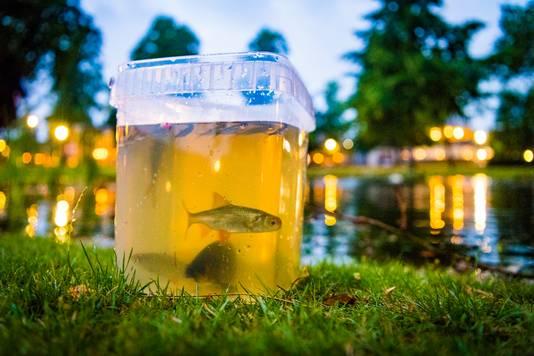 Buurtbewoners scheppen de vissen uit de vijver in een poging ze te redden.