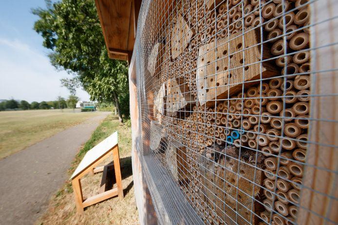 Zevenbergen - 10-8-2020 - Foto: Pix4Profs/Marcel Otterspeer - Het Suikerpad is vernieuwd, en ook de directe omgeving profiteerde daarvan. Aan het welzijn van bloemen en bijen is ook gedacht.