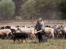 Help, het gras voor de schapen is bijna op