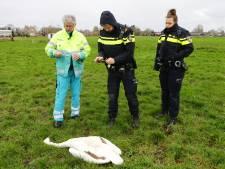 'Vinden daders dode zwanen is een zaak voor de politie'