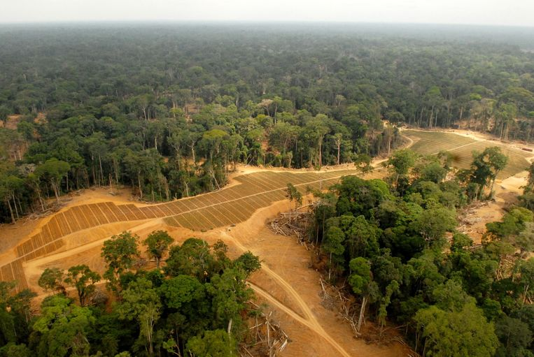 Een stuk bos dat gekapt is voor de productie van palmolie in Gabon. Beeld AFP