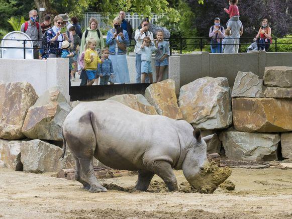 Dankzij de nieuwe glazen wanden kunnen grote en kleine bezoekers de grijze zwaargewichten dichter dan ooit bewonderen.