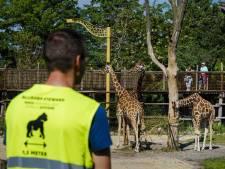 Blijdorp stevent af op tekort van 10 miljoen euro:  'Zonder steun overleven we dit niet'