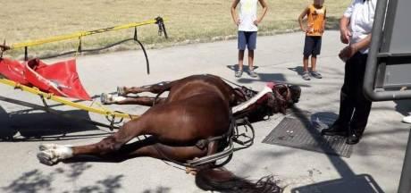 Un cheval meurt d'épuisement en tirant des touristes sous la canicule