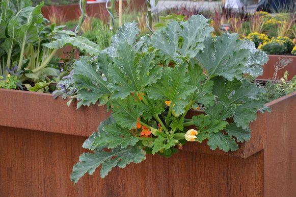 Tuinieren in potten is een van de slimste manieren om te blijven tuinieren