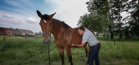 'Paarden komen niets tekort in de processie naar Handel'