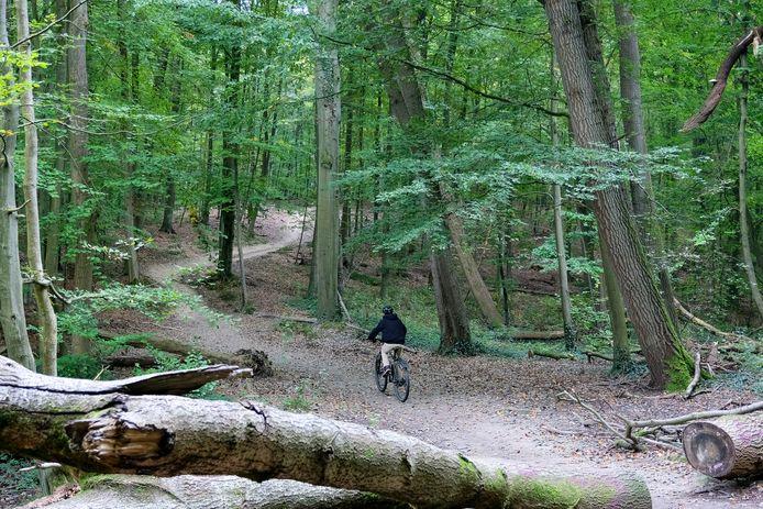 Het Zoniënwoud in Hoeilaart is nog één van de groene plekken, maar in de kern wil de gemeente 17 hectare open ruimte nu ook groen houden.