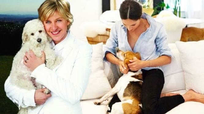 Ellen DeGeneres en Meghan Markle hebben gemeenschappelijk liefde voor honden