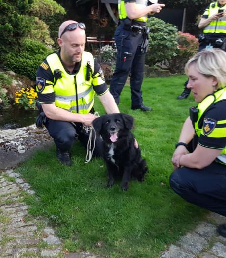 Pan met eieren vat vlam: hond uit Hengelose woning gered