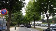 Sneuvelen er 200 bomen in de Kardinaal Mercierlaan? Leuven laat de paardenkastanjes onderzoeken door de 'bomendokter'