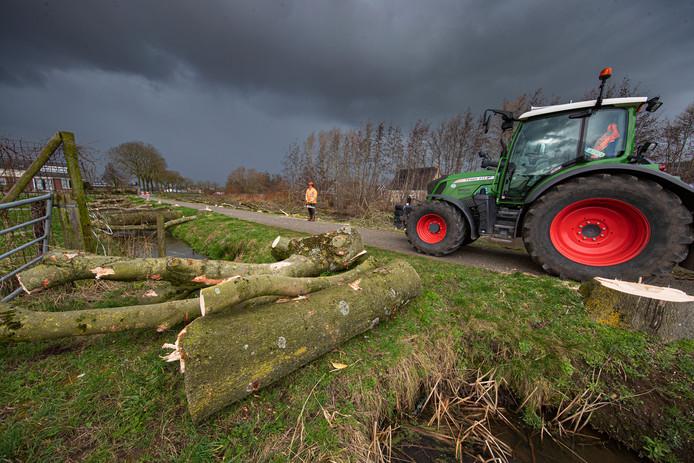 Aan de Trekvaart in IJsselmuiden is de gemeente vandaag begonnen de resterende 57 zieke essen te kappen. Omwonenden kwamen eind vorig jaar in actie om de kap van in totaal 77 door de essentakziekte aangetaste bomen te voorkomen.