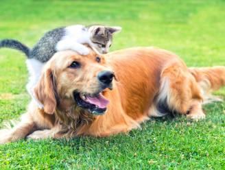 Alle honden en katten ter wereld eten geven? Dan moet een gebied 16 keer zo groot als België worden verbouwd