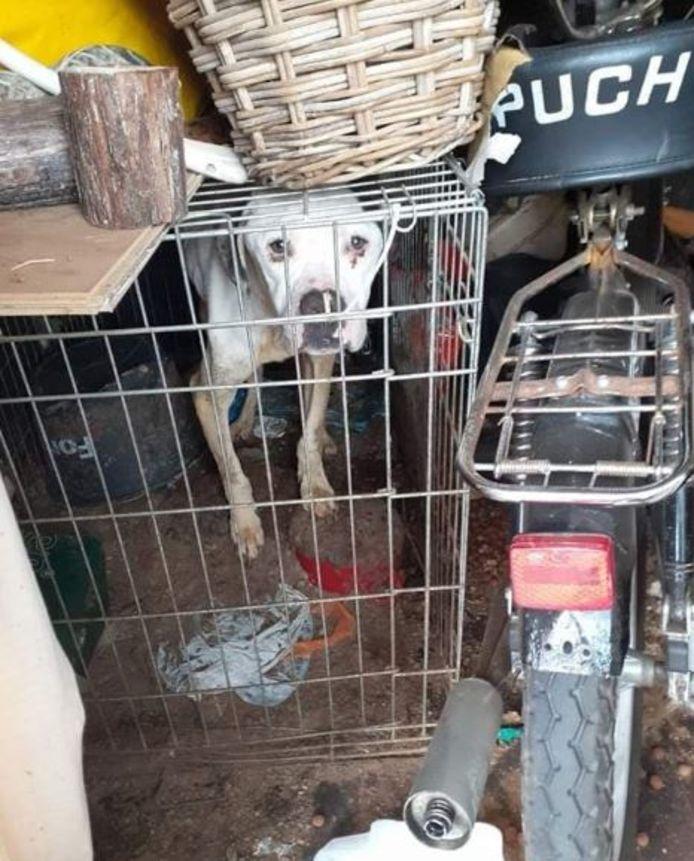 De honden werden gevonden in een vieze omgeving in Oldebroek.