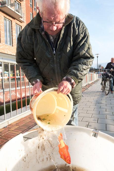 Alle goudvissen uit Brouwersgracht krijgen nieuw onderdak