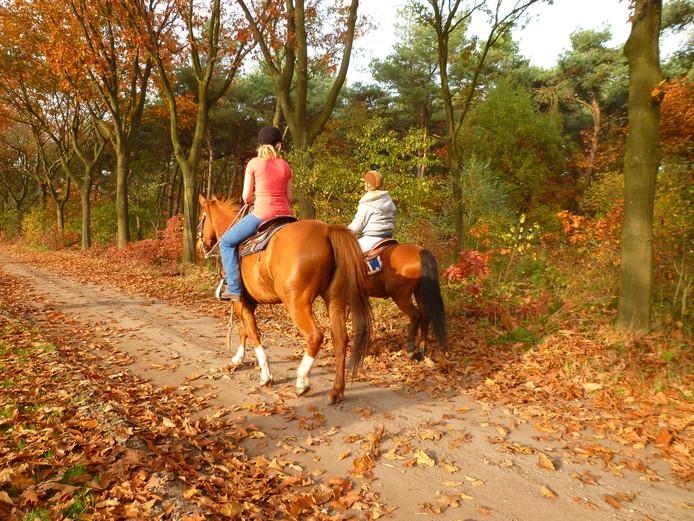 Paardenroutes in Bergeijk