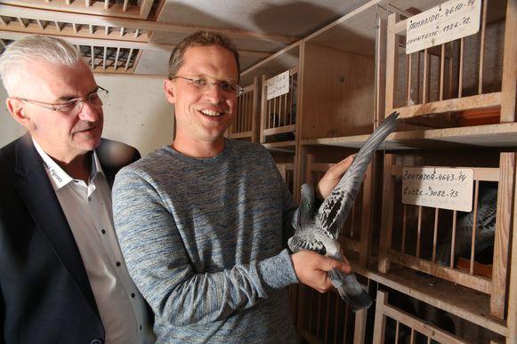 """Nikolaas Gyselbrecht met Armando, die samen met 177 andere duiven verkocht werd via zijn site. Hij heeft een commissie van zo'n 30%, goed voor 720.000 euro. """"Het was een goede dag"""", zegt hij fijntjes."""