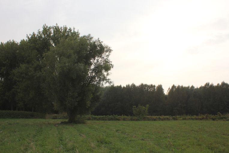 Natuurgebied Honegem.