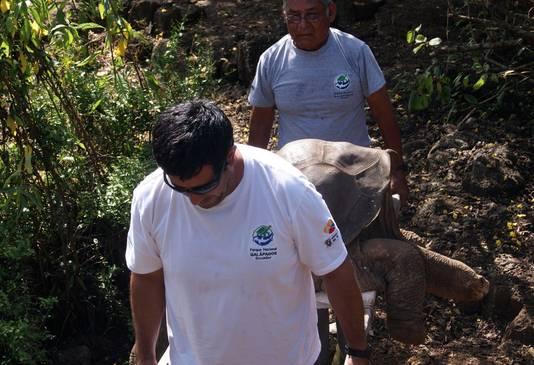Twee verzorgers voeren de dode schildpad af.