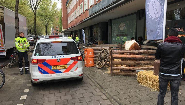 Koe Wilma met haar kalf voor broodjeszaak Koeman Beeld Jorien van der Keijl