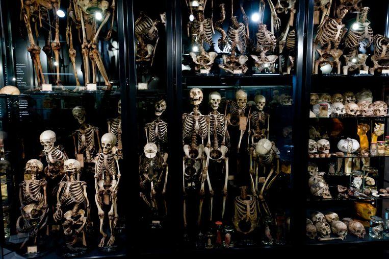 Lekker griezelen tussen alle skeletten. Beeld Maarten Steenvoort