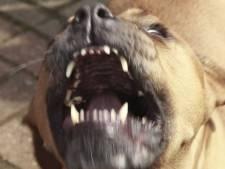 Politie zoekt baasje bijtende hond Rotterdam-Charlois