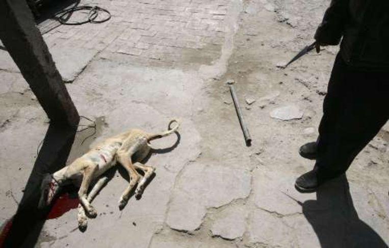 De hond wordt doodgeknuppeld met een metalen staaf