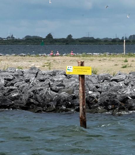 Duitsers halen grap uit met nepflamingo's op vogeleiland Bliek