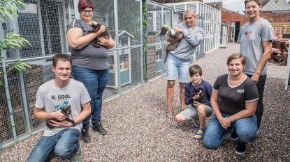 Bestelwagen dierenasiel Hoop voor Zwervertjes op oprit gestolen
