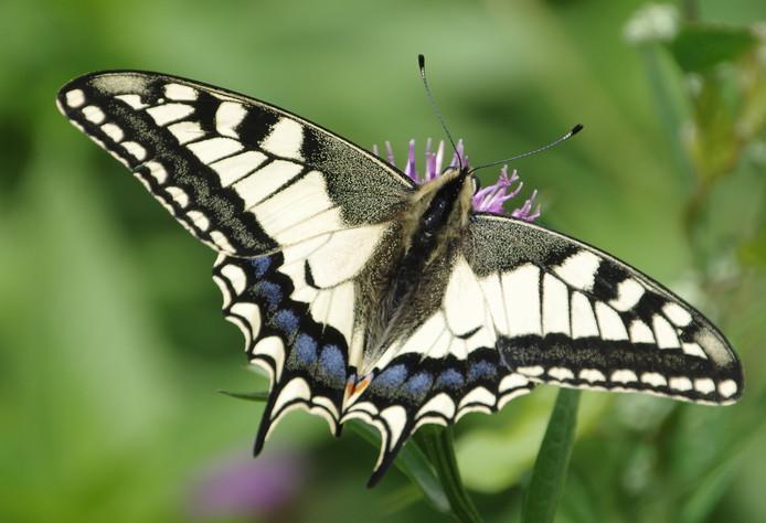 Ter nagedachtenis aan haar dochter heeft moeder Nicole een tatoeage laten zetten van een vlinder die naar de hemel vliegt.