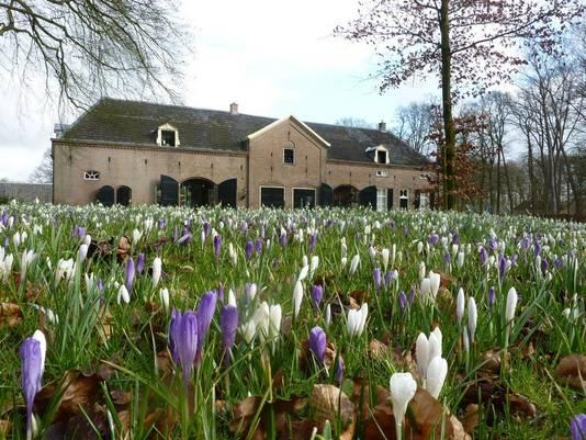 Krokussen en sneeuwklokjes bij kasteel Hackfort in het buitengebied van Vorden.