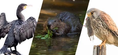 Deze dieren vliegen en scharrelen weer rond de rivier
