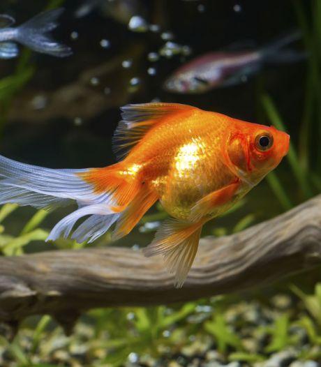 Tropische vissen keren niet terug in Tilburgse garage