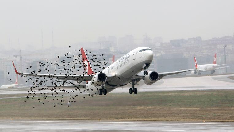 Een toestel van Turkish Airlines stijgt op, hier op archiefbeeld. Beeld REUTERS