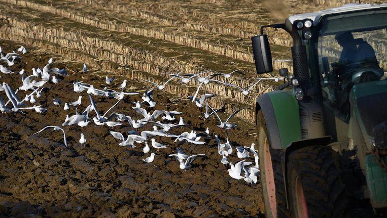 Vogels op een akker Beeld null