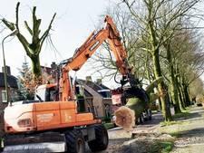 Beukenstraat Oisterwijk straks 76 bomen armer: 'Het is onvermijdelijk'