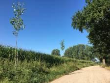 Het gaat door: 4.000 bomen erbij in Haaren