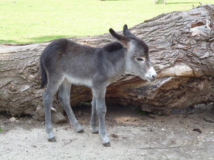 Sissi is dit jaar het lievelingsdier van de Tiergarten in Kleef.