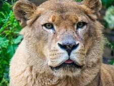 Leeuwin Sabari (19) overleden