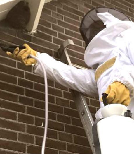 Putten haakt af met wespenbestrijding bij de mensen thuis, Harderwijk behoudt service als enige in de regio