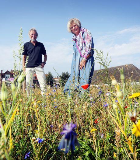Tussen de korenbloemen in hartje Breda:  'Dit ziet er toch fantastisch uit'