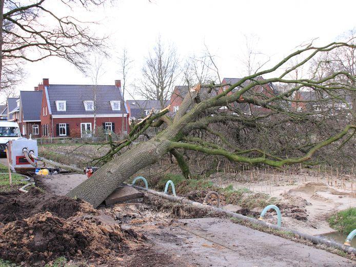 De omgevallen boom in Lunteren.