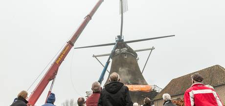 Molen De Zwaluw in Hasselt gekortwiekt