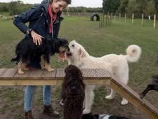 Hondenspeeltuin Wierden tijdelijk dicht door natte grond