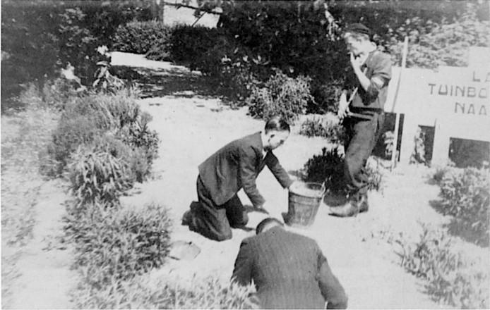 Na de Tweede Wereldoorlog moesten NSB-leden in Naaldwijk onkruid wieden.