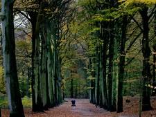 Boswachter: Ga nog niet het bos in