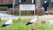 Rusthuis De Ravestein van zwarte lijst Zorginspectie geschrapt