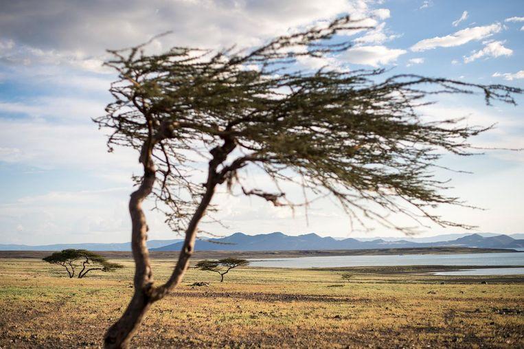 'In deze afgelegen grond is de oudste menselijke beschaving gevonden. Maar het is een verlaten plek, waar niets is.' Beeld Sven Torfinn